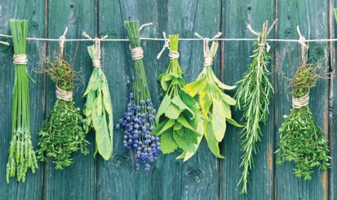 drying-herbs jpg