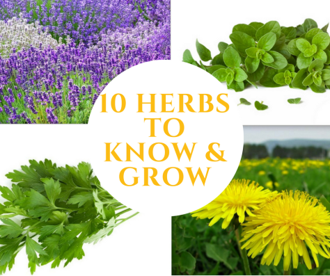 10 herbs to